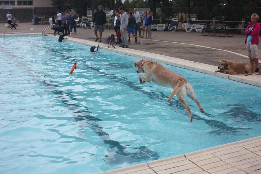 Swimming Gone To The Dogs 39 15 City Of Sioux Falls