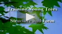training tress